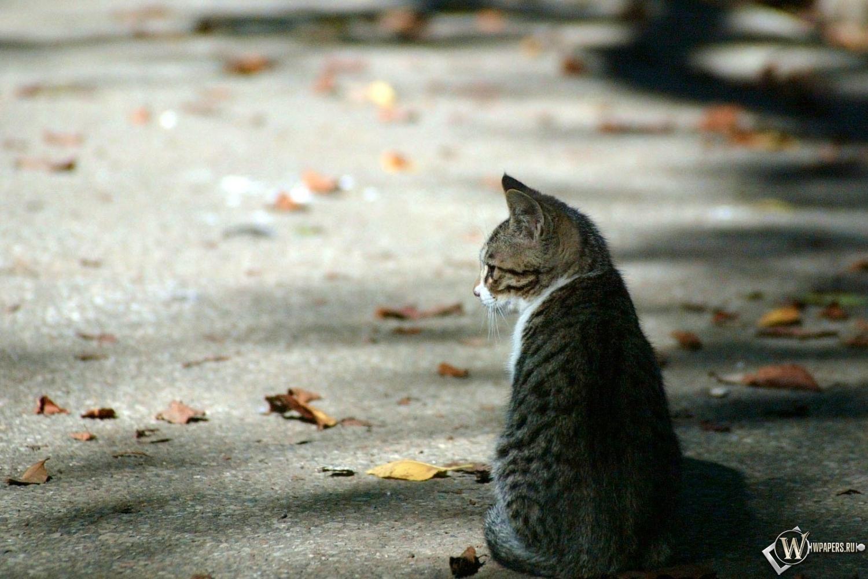 Осенний котёнок 1500x1000