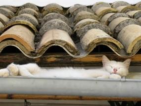 Обои Кошка на крыше: Кошка, Крыша, Кошки