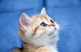 Обои Милый котёнок: Кот, Кошка, Котёнок, Кошки
