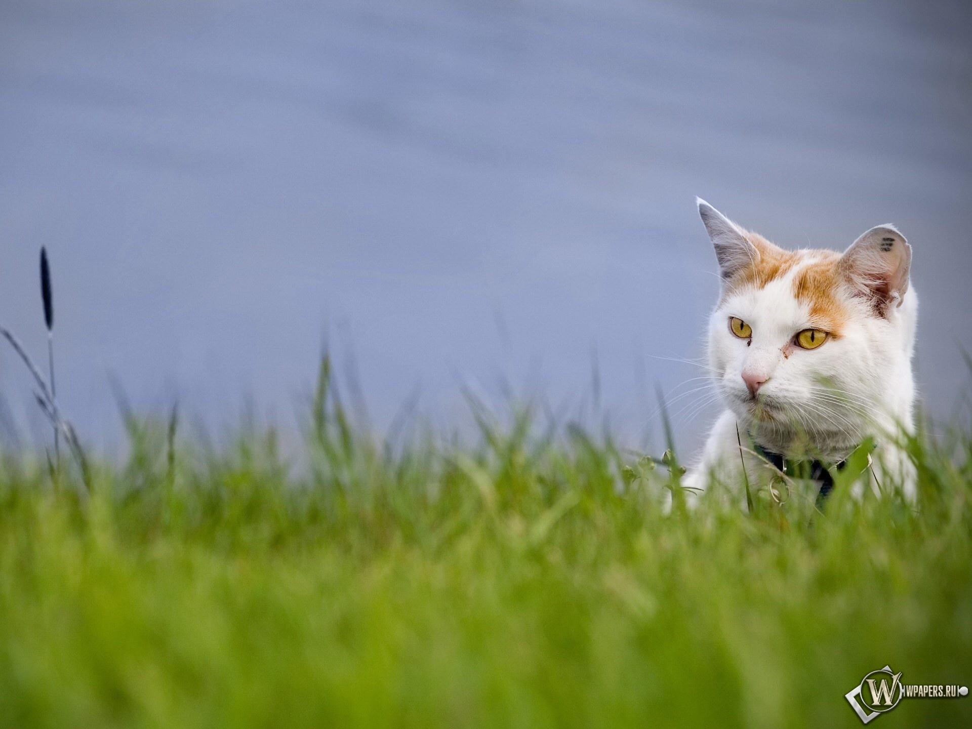 Кот в траве 1920x1440