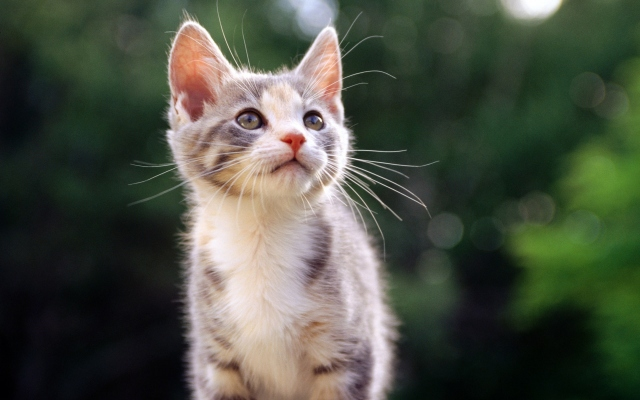 Красивый Котёнок