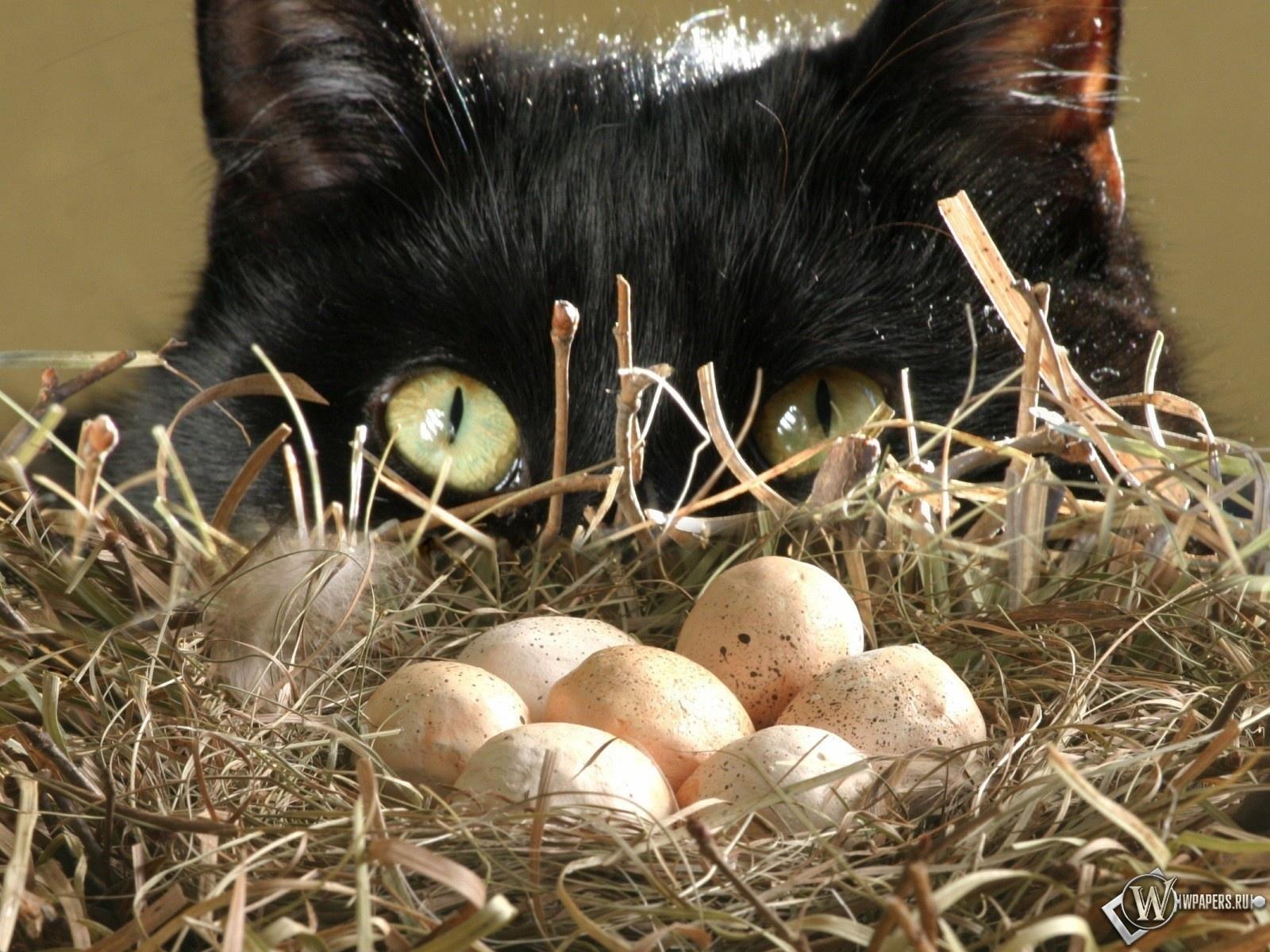Кот у гнезда 1600x1200