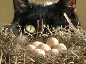 Кот у гнезда