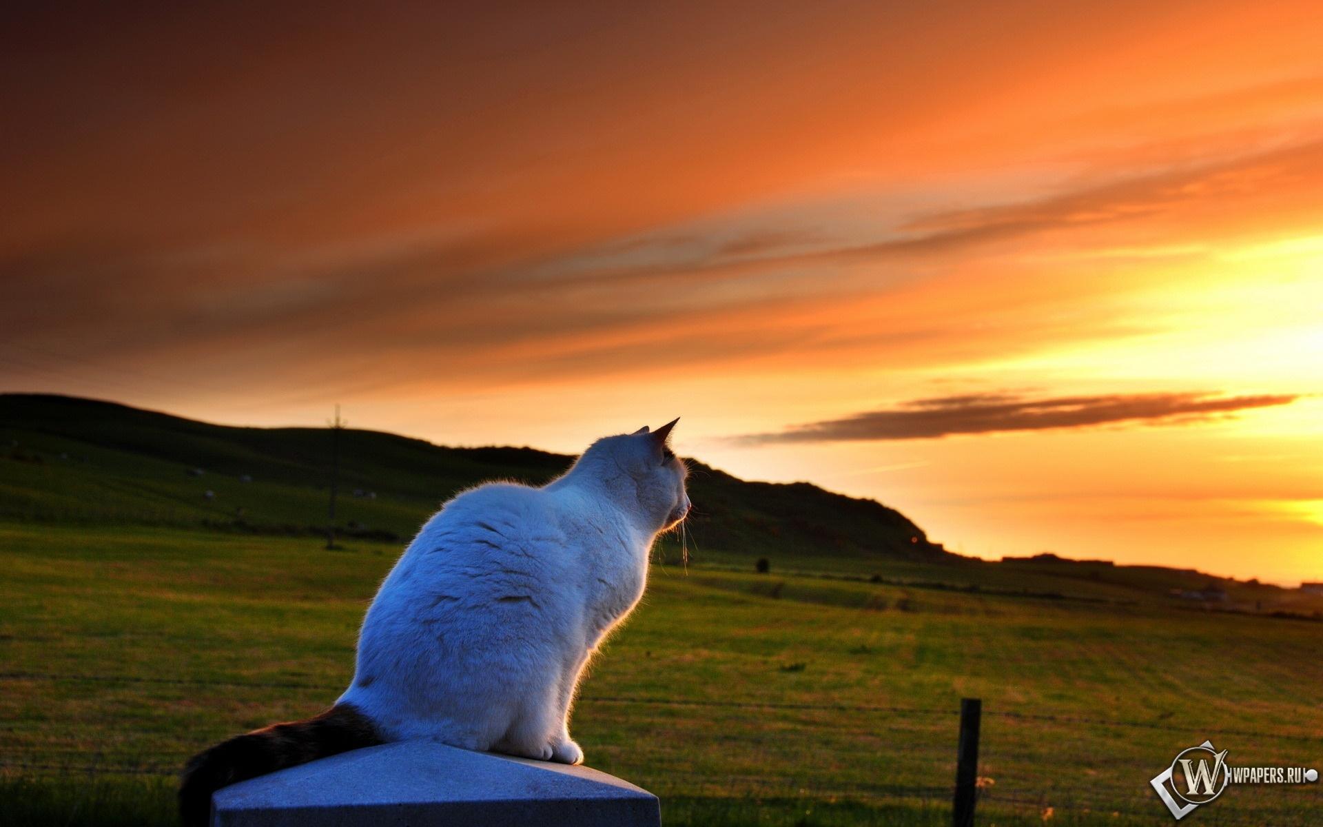 Кошка любуется закатом 1920x1200