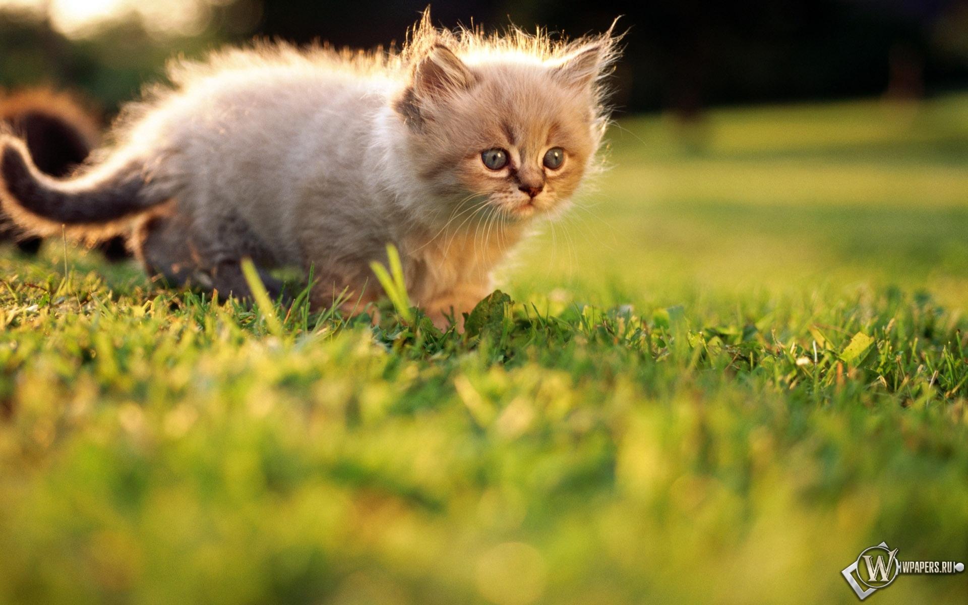 Котёнок на прогулке 1920x1200