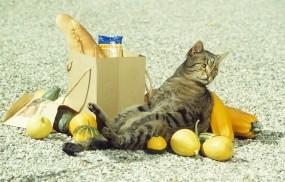 Обои Объевшийся кот: Кот, Отдых, покупки, Кошки