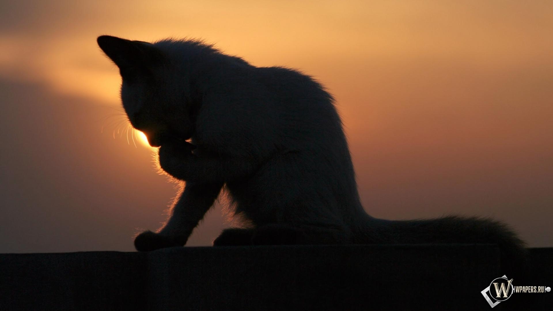 Котёнок на закате 1920x1080