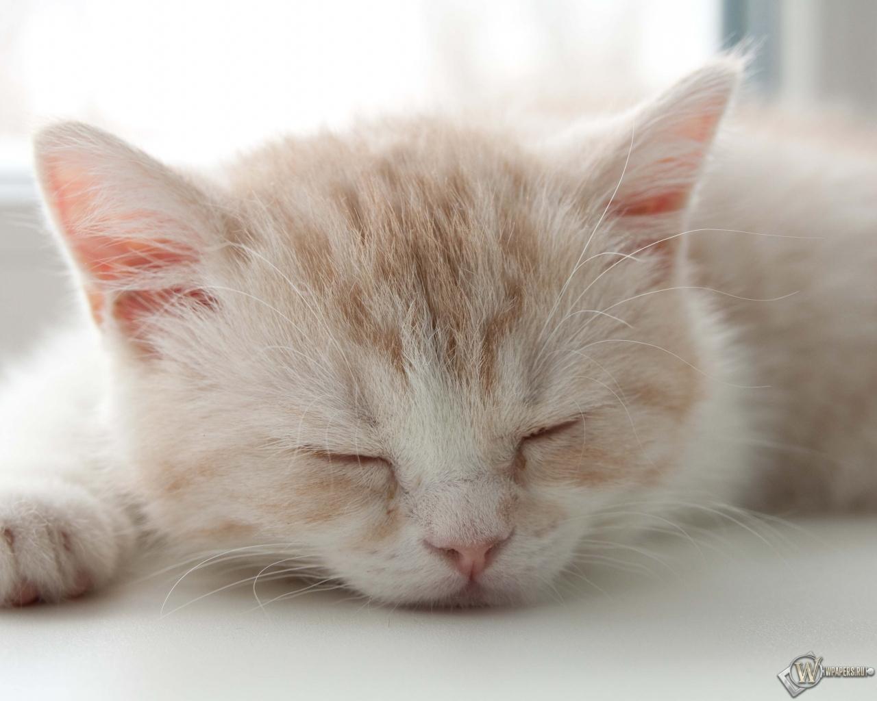 Котёнок спит 1280x1024