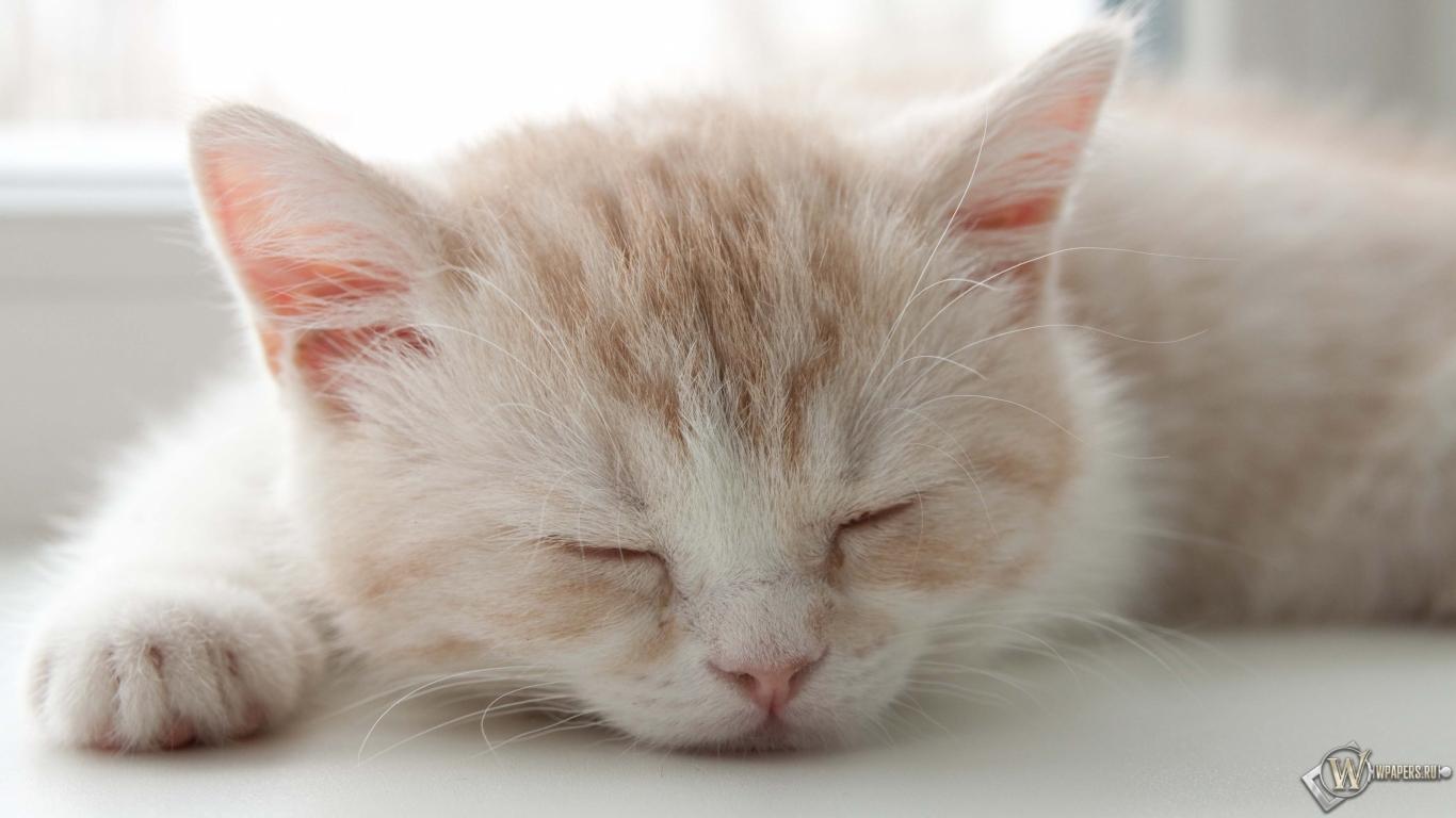 Котёнок спит 1366x768