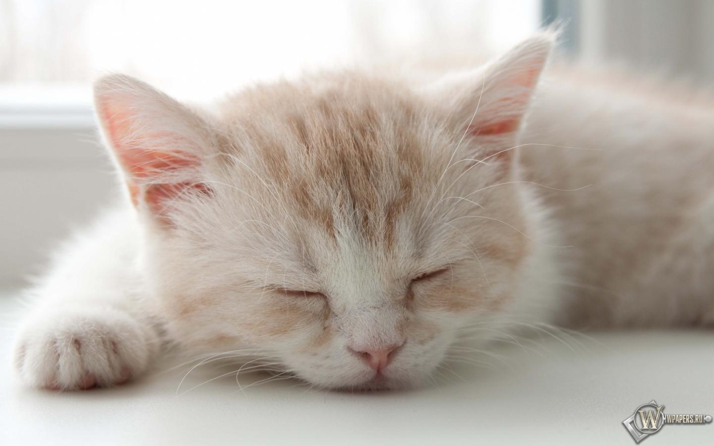 Котёнок спит 1440x900