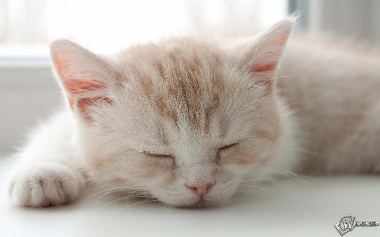 Котёнок спит 1536x960