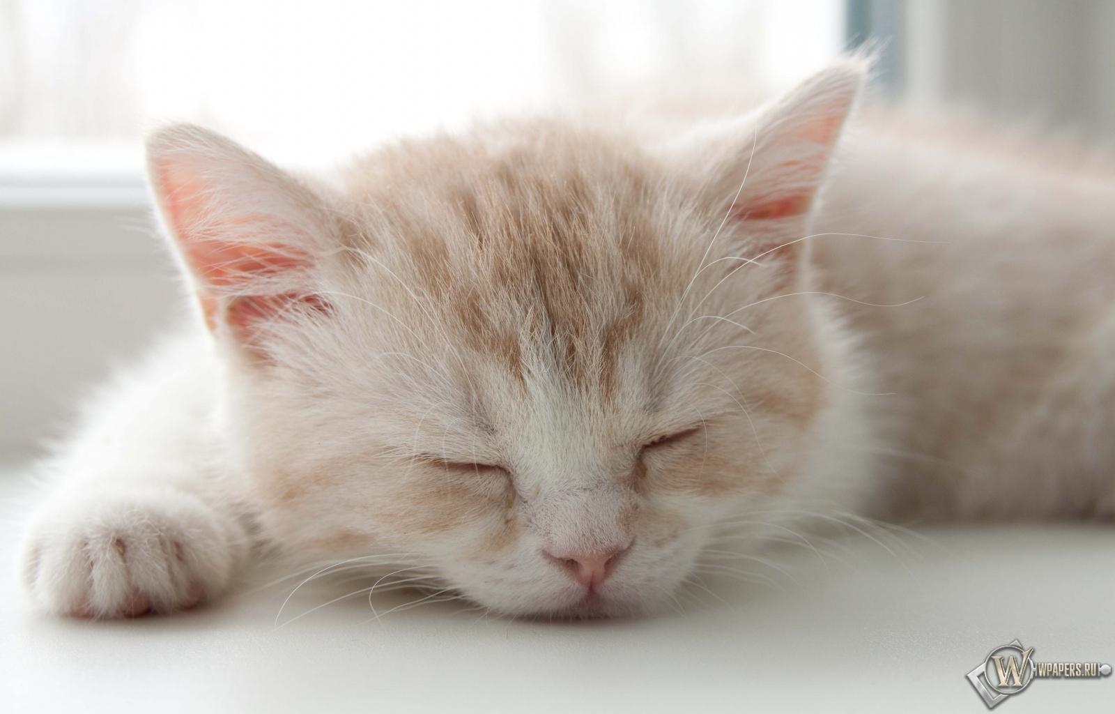 Котёнок спит 1600x1024
