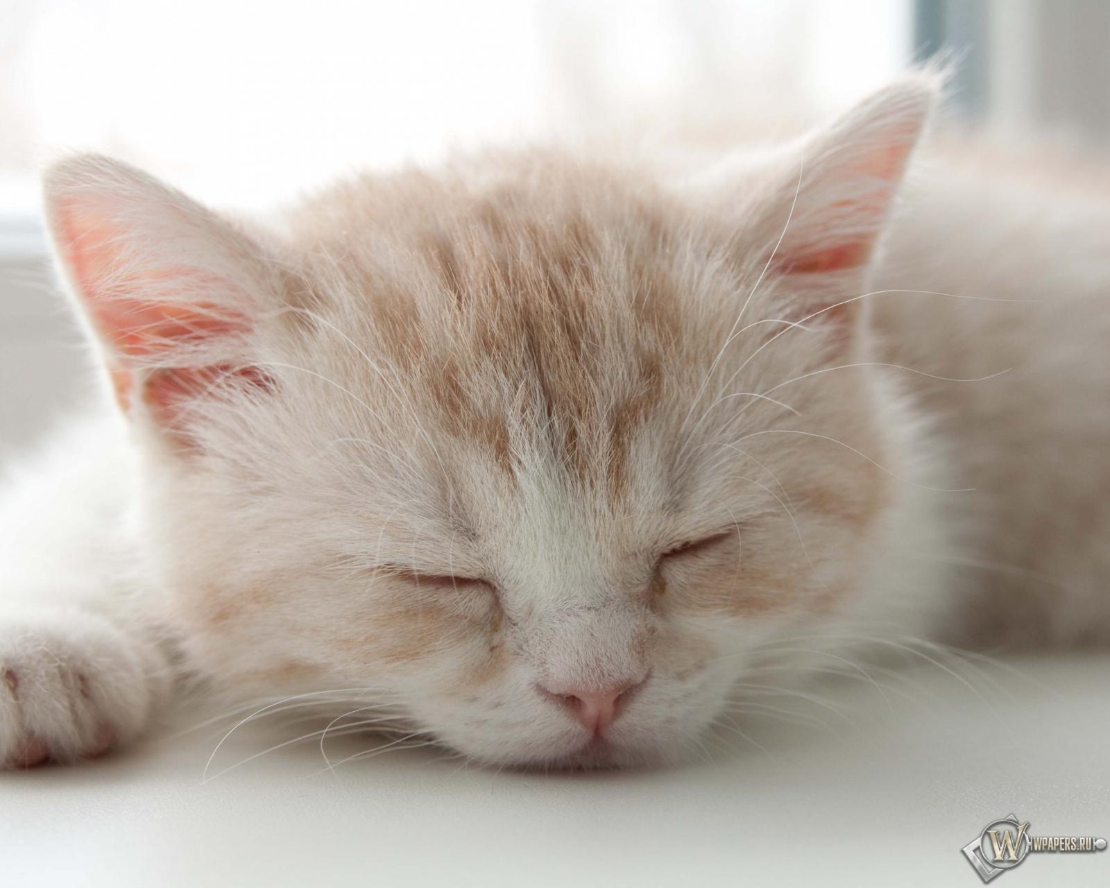Котёнок спит 1600x1280