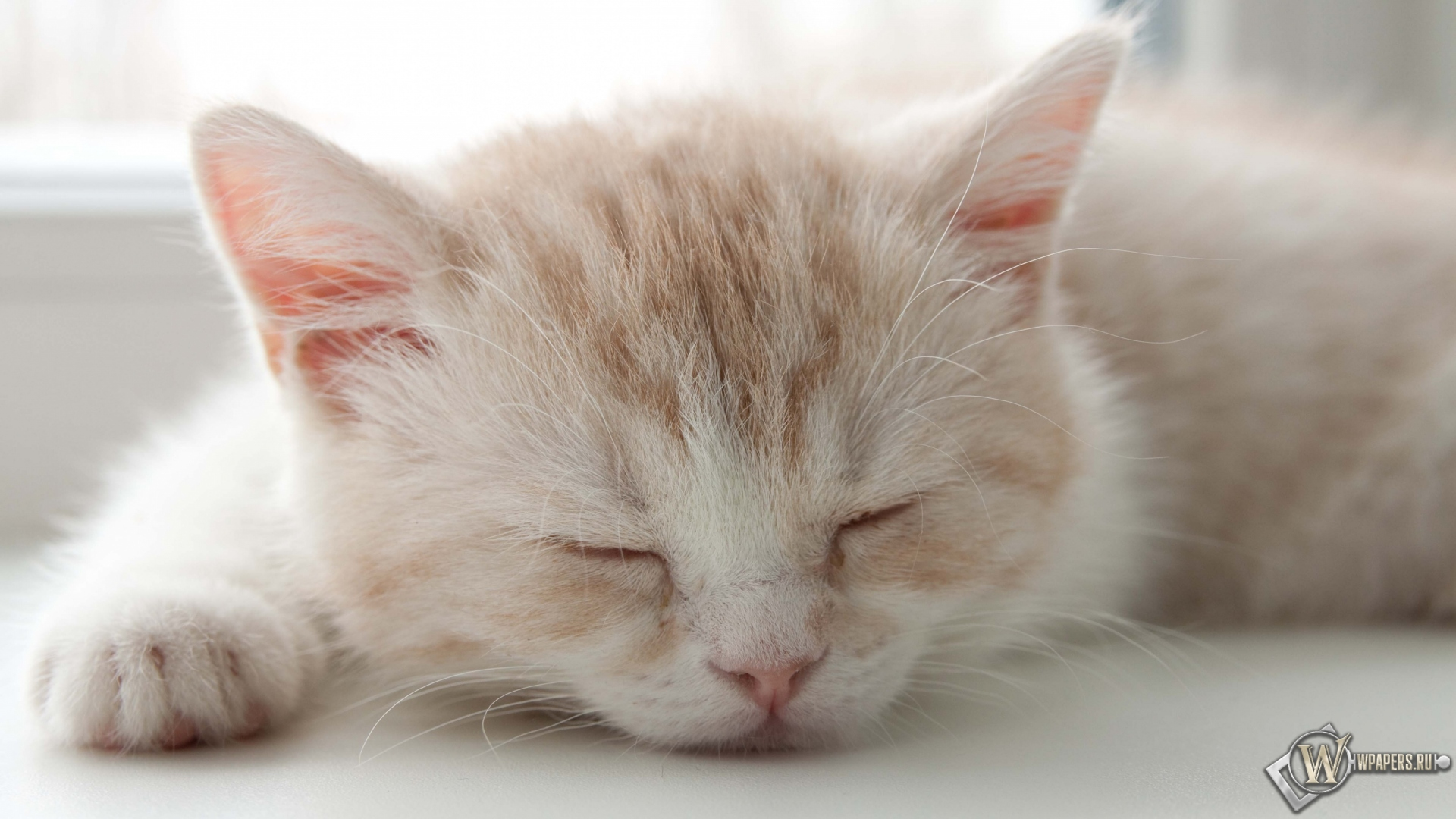 Котёнок спит 1920x1080