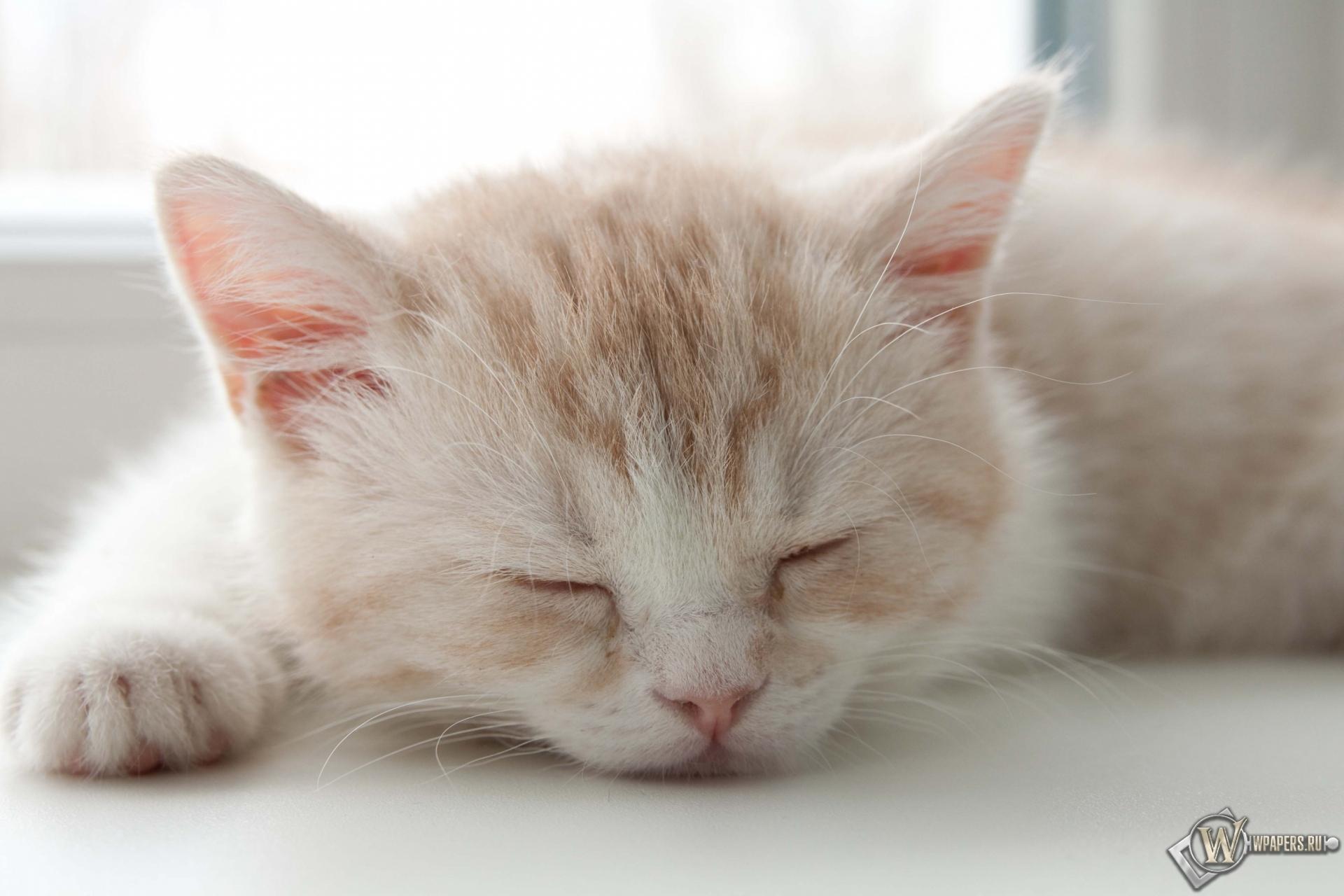 Котёнок спит 1920x1280