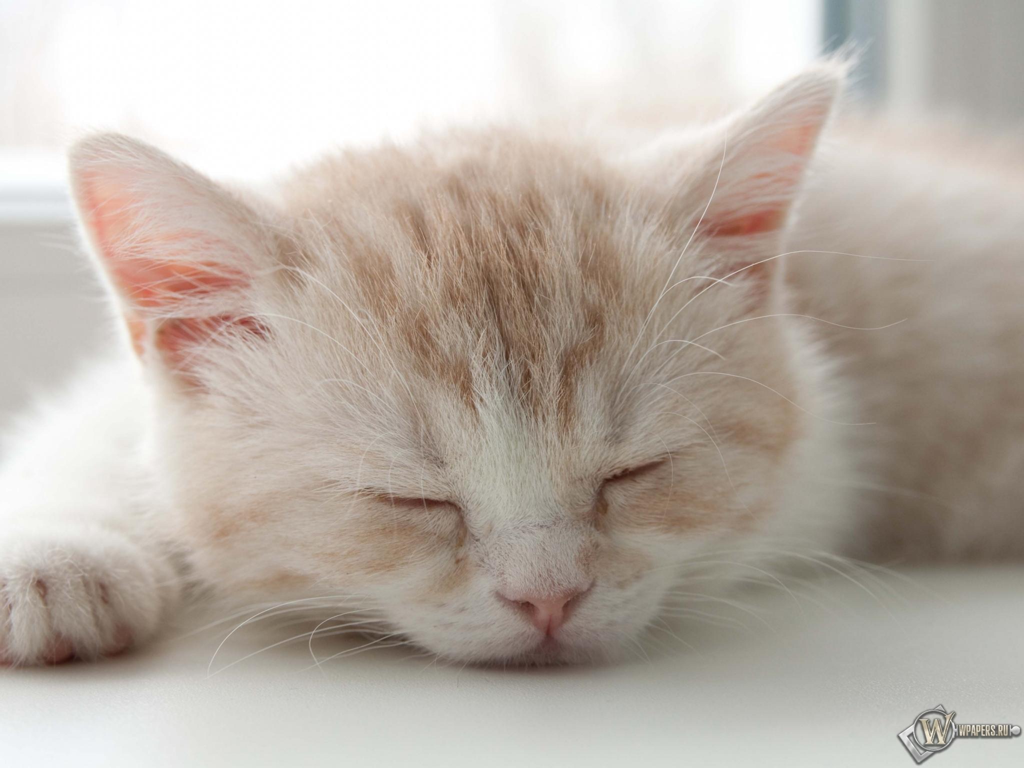 Котёнок спит 2048x1536