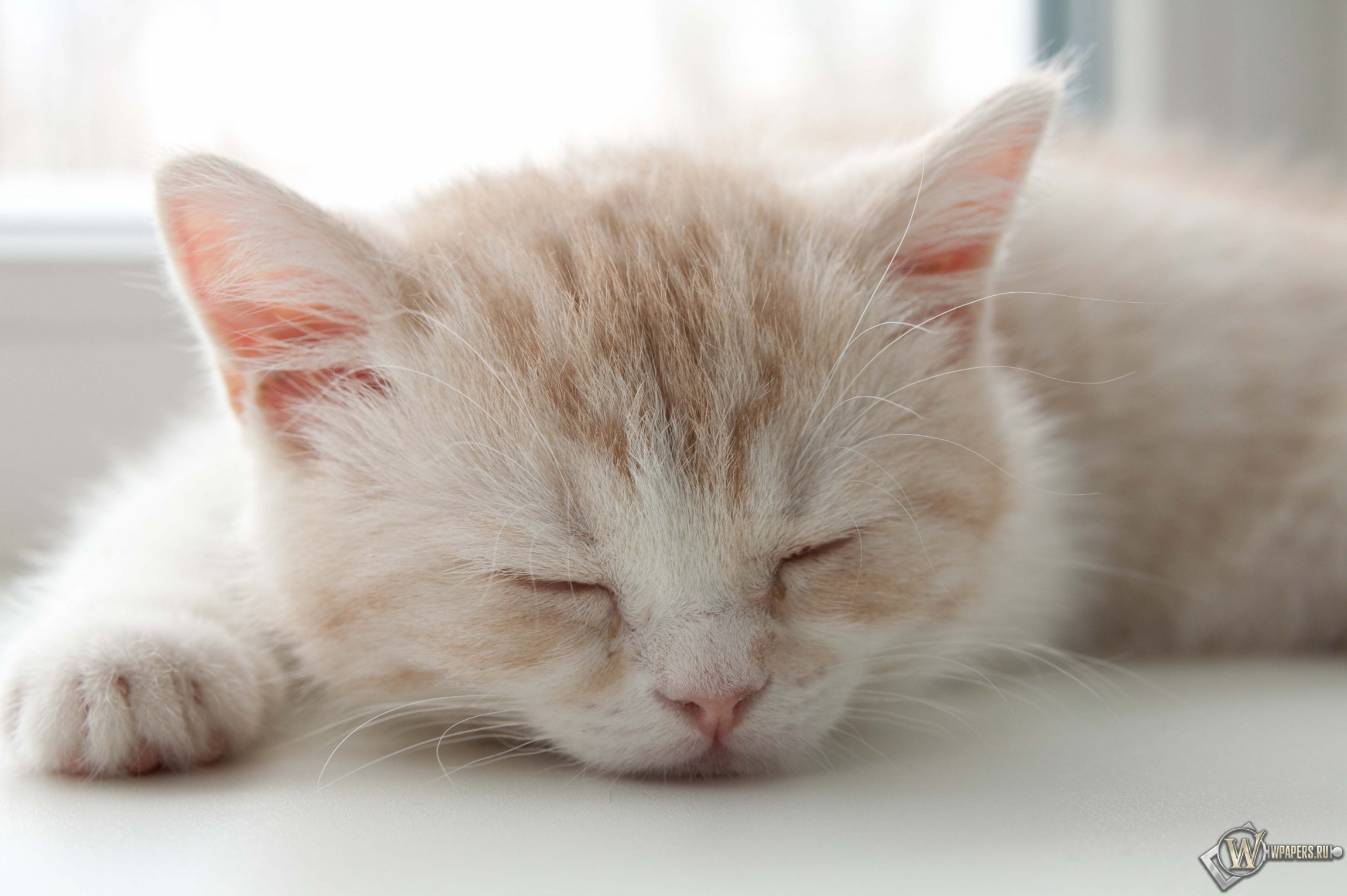 Котёнок спит 2300x1530