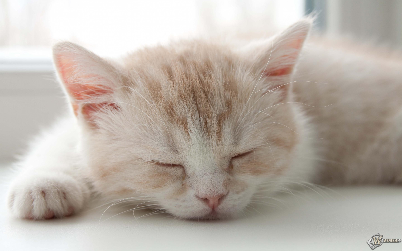Котёнок спит 2880x1800