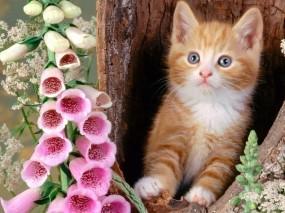 Обои Котёнок с цветком: Дерево, Цветы, Котёнок, Кошки