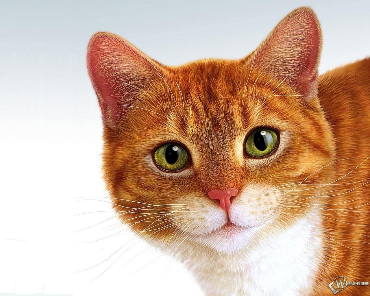 Рыжий кот 1280x1024