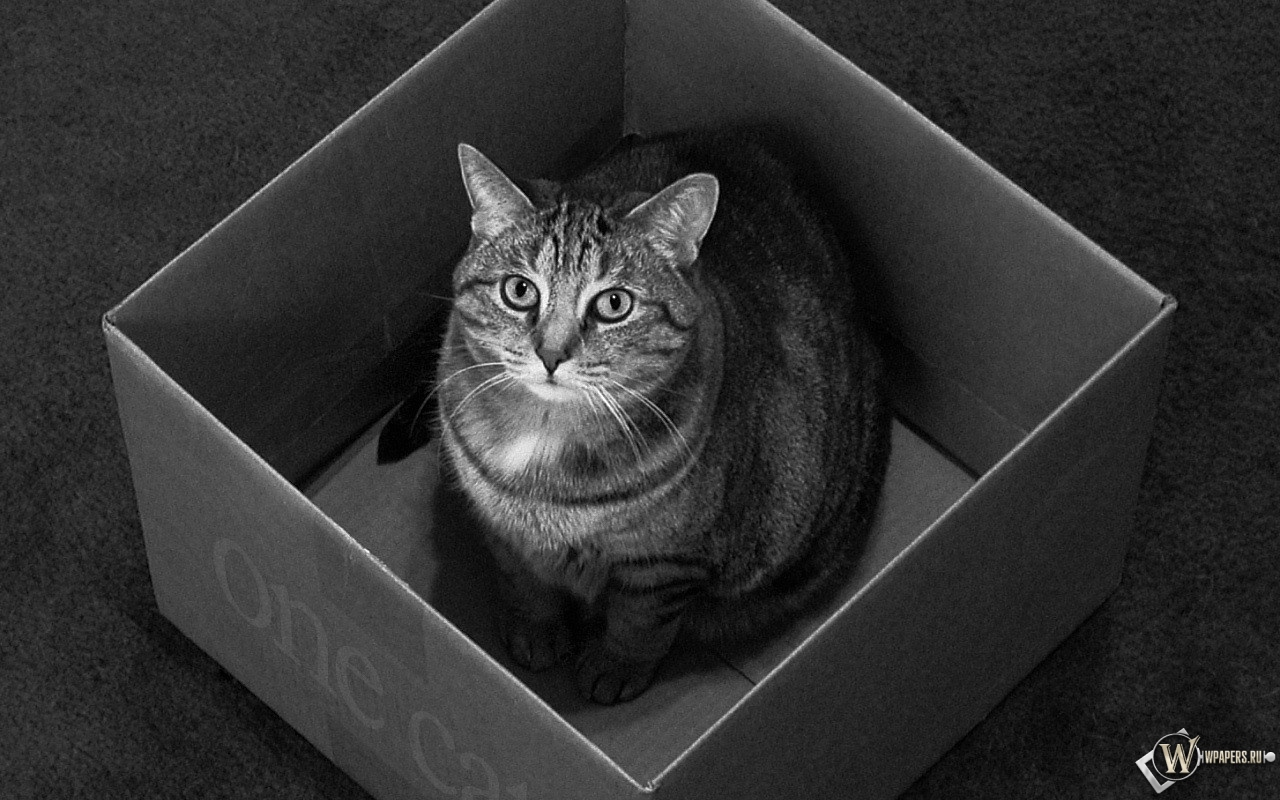 Кот в коробке 1280x800