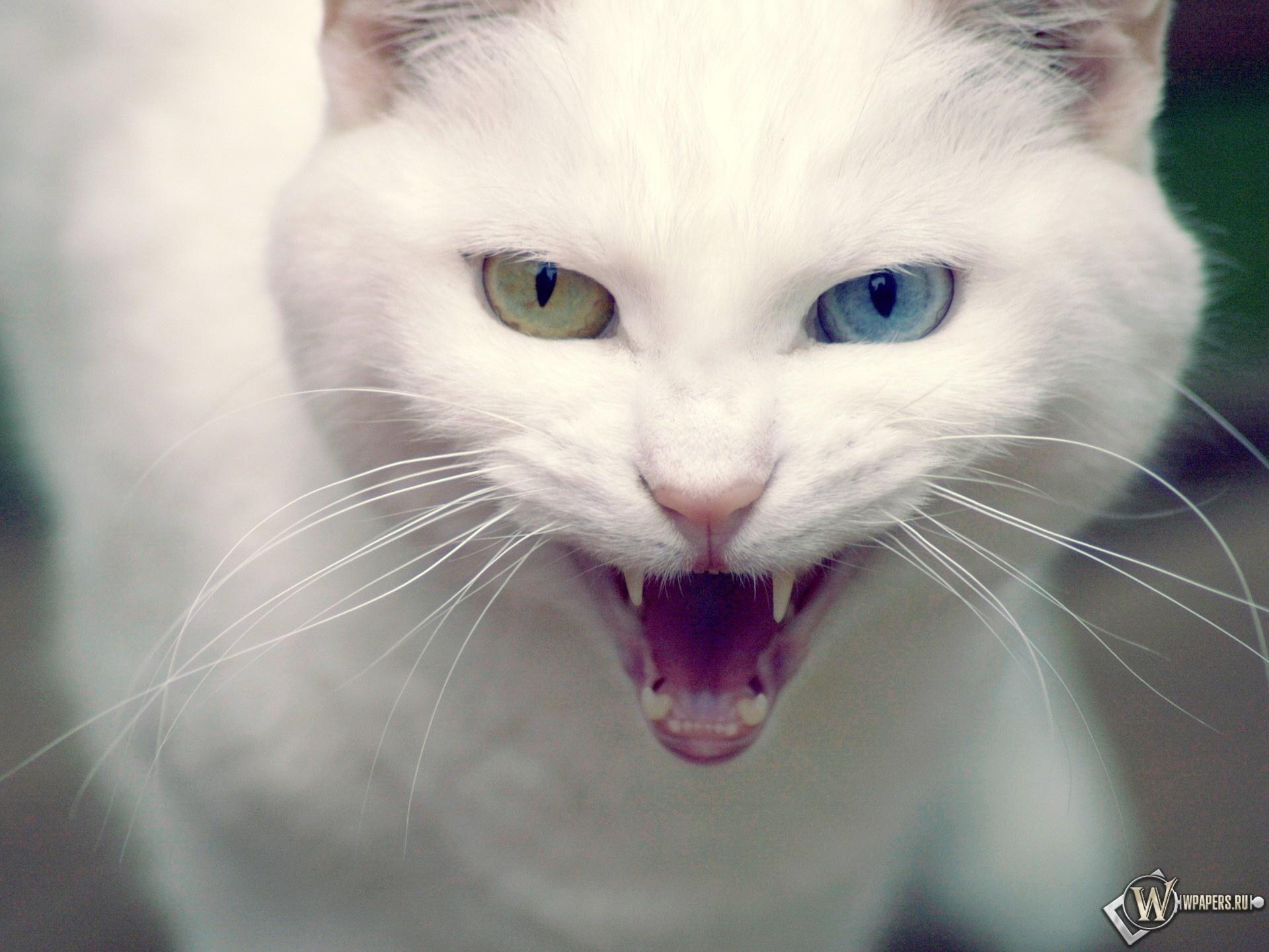 Белый кот 1920x1440