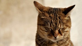 Кошка зажмурилась
