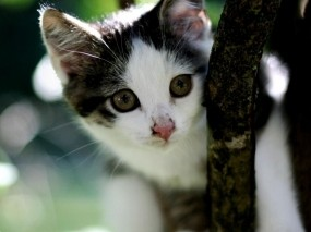 Обои Милый котёнок: Ветка, Котёнок, мордочка, Кошки