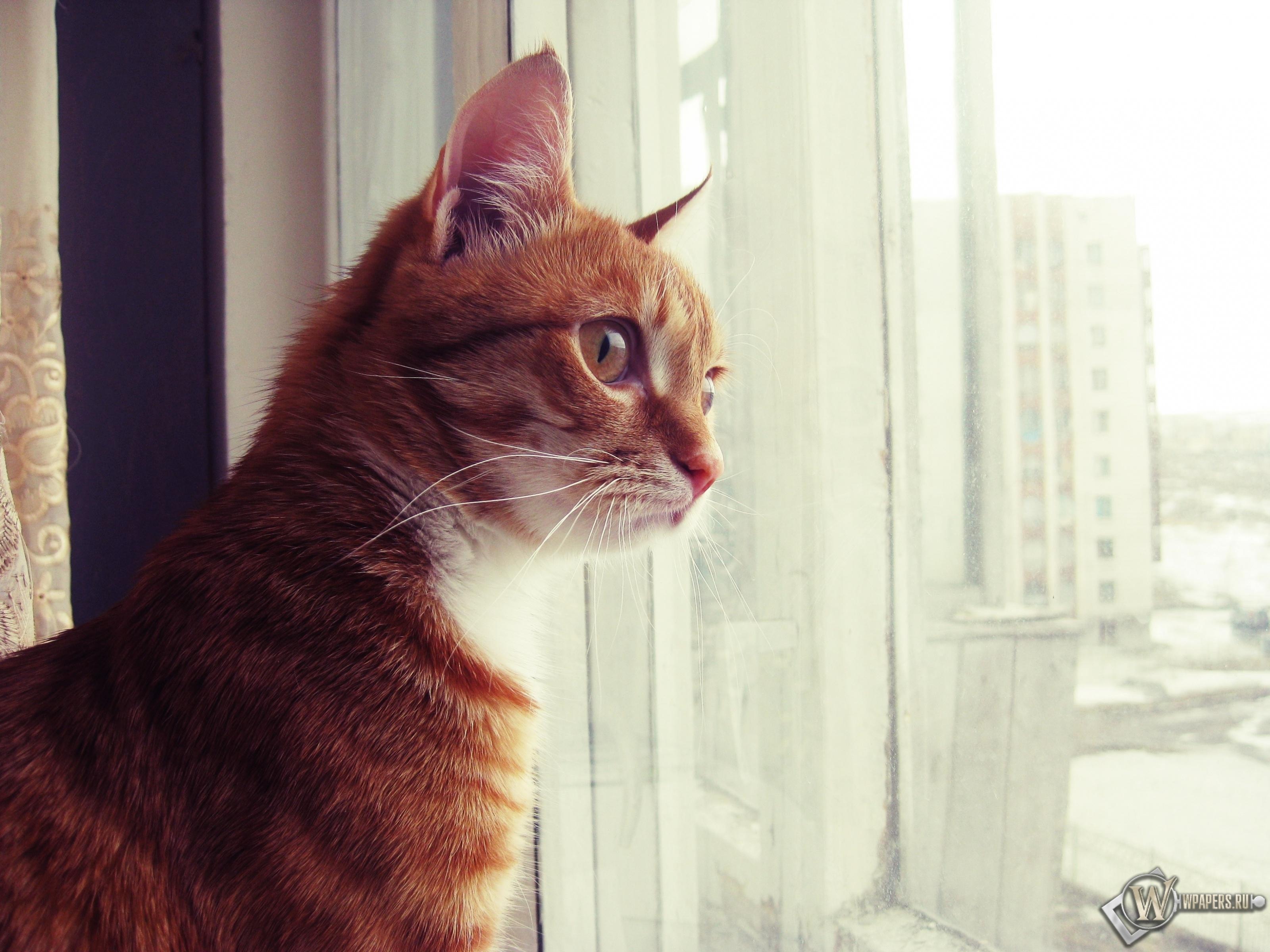 Кот смотрит в окно 3200x2400