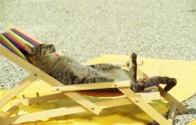Обои Кот загорает: Кот, Отдых, Кошки