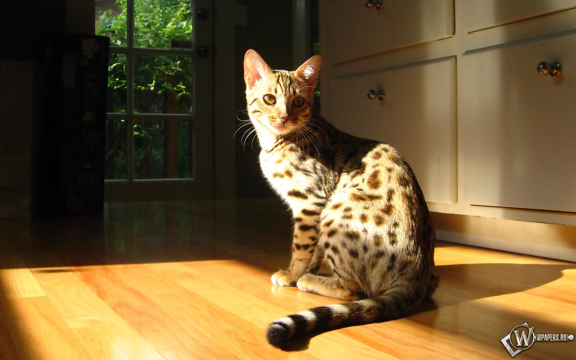 Кошка на солнышке 1920x1200
