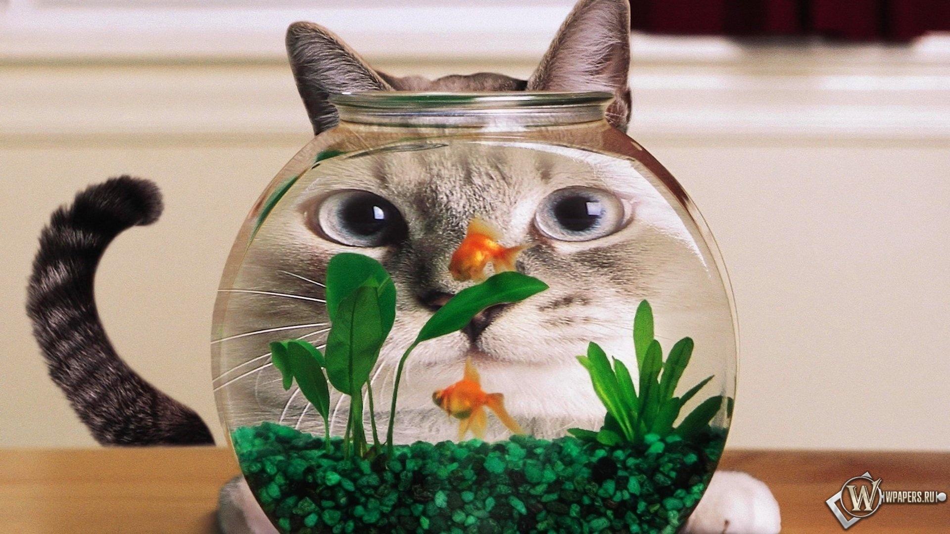 Кот в аквариуме 1920x1080