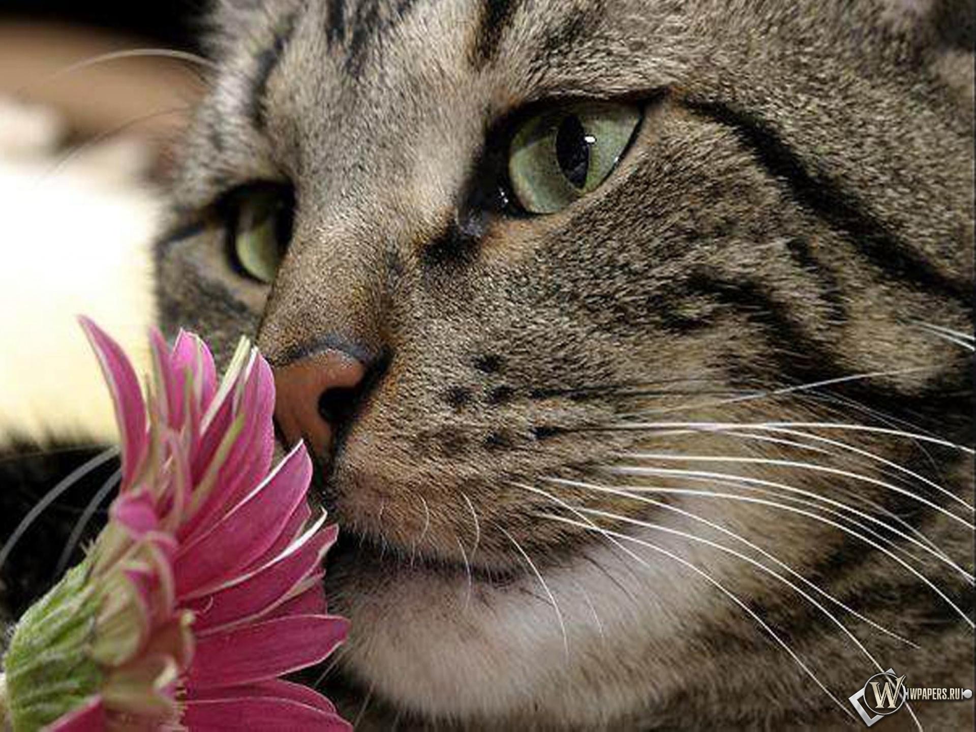 Кот с цветком 1920x1440