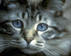 Обои Просящий взгляд кота: Взгляд, Котёнок, Кошки