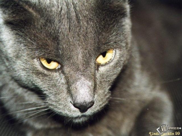 Грозный взгляд кота