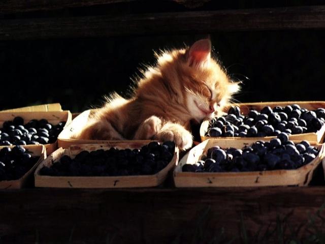 Котенок уснул в ягодах