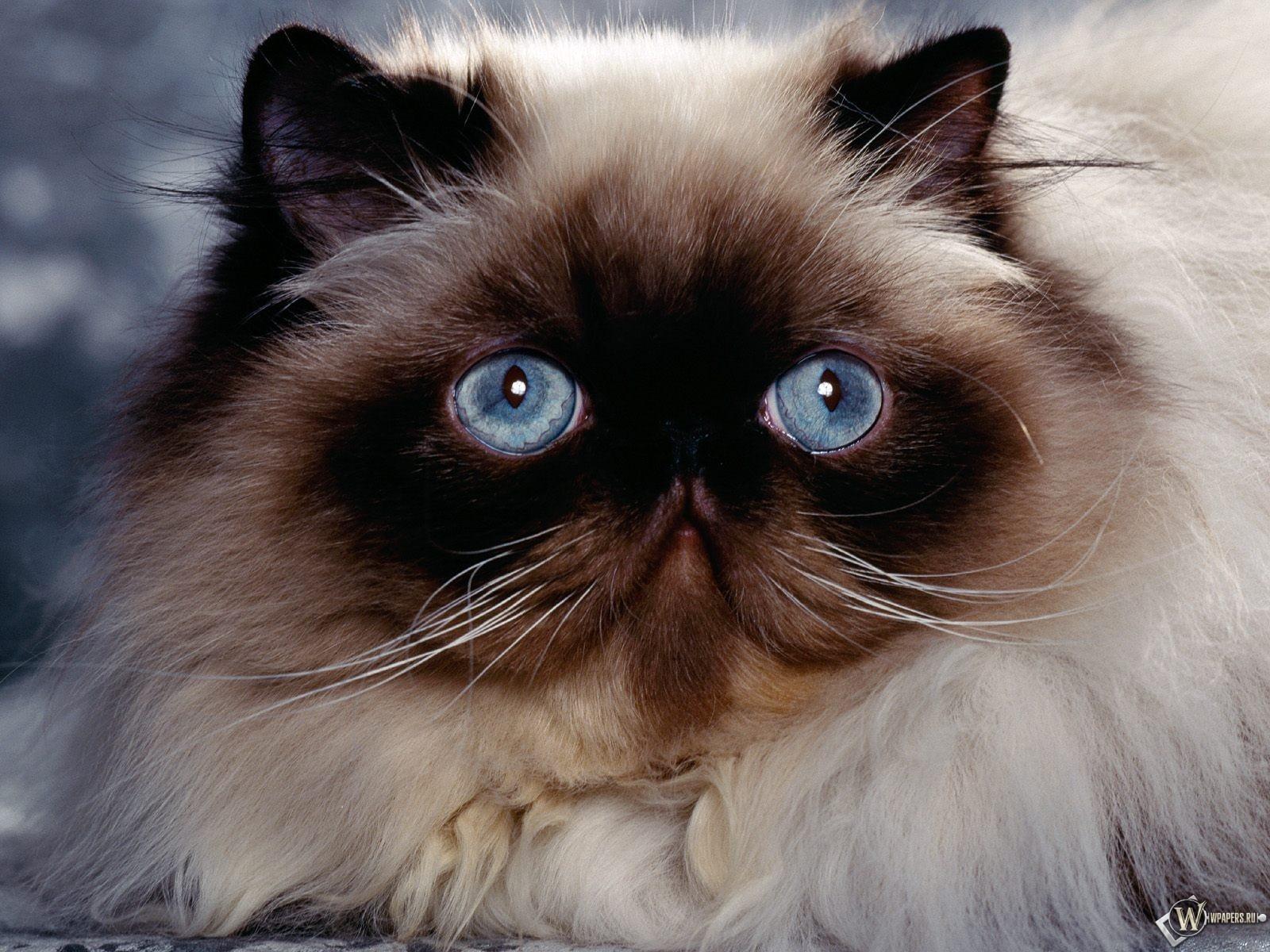 Грустный взгляд кошки 1600x1200