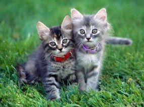 Обои Котята на травке: , Кошки