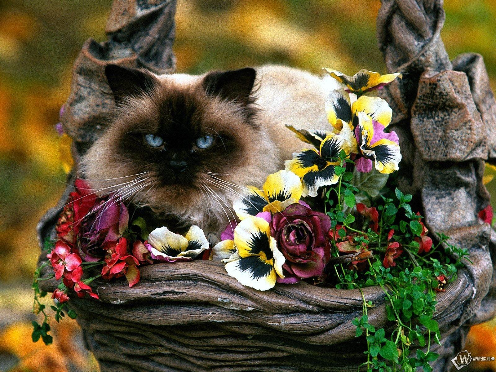 Кошка в клумбе 1600x1200