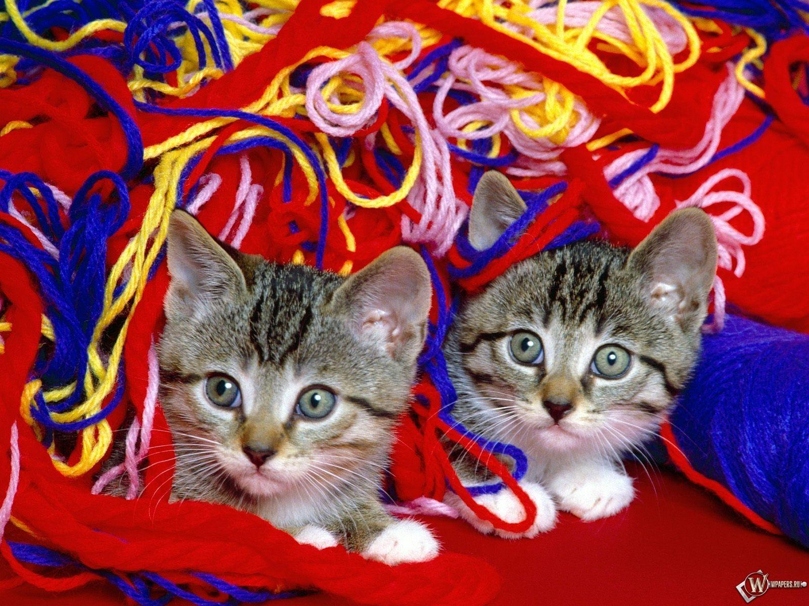 Два котенка в нитках 1600x1200