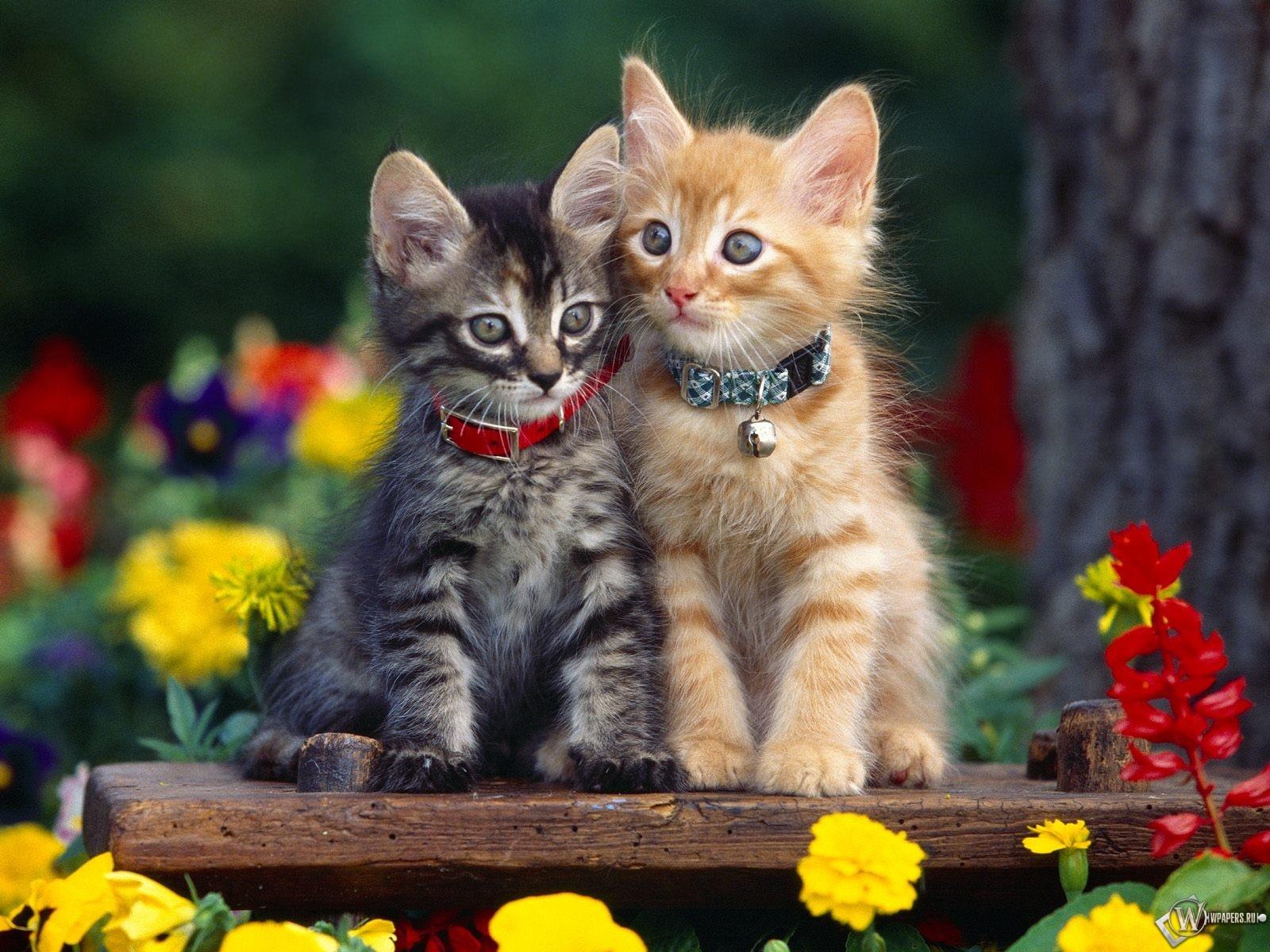 Два очаровательных котенка 1600x1200