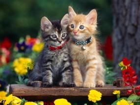 Обои Два очаровательных котенка: , Кошки
