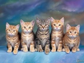 Обои Банда котят: , Кошки