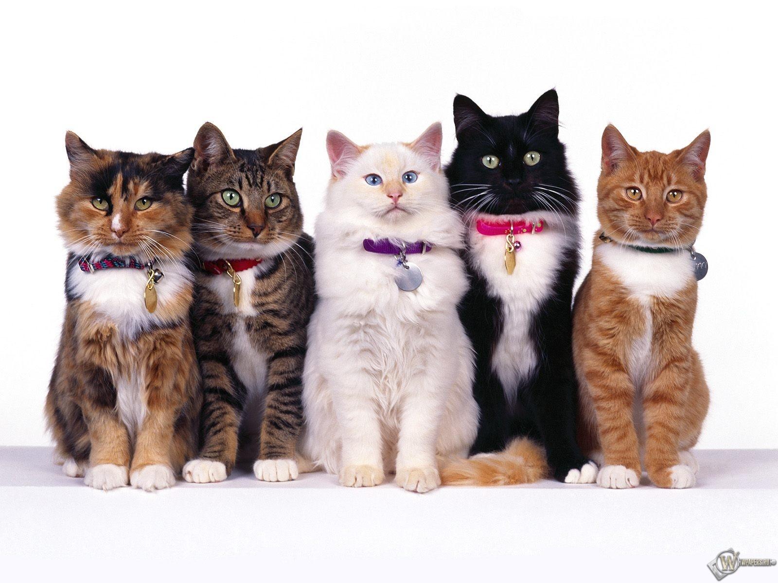 Пять очаровательных кошек 1600x1200