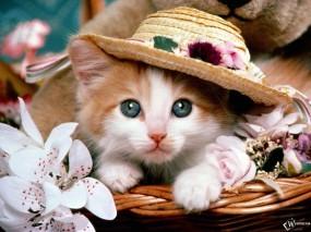Обои Котенок со шляпой: , Кошки