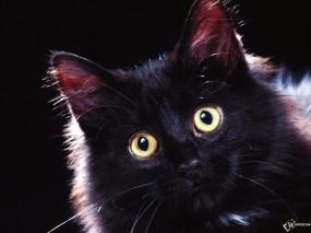 Обои Морда черного мяфса: Котёнок, Чёрный кот, Кошки