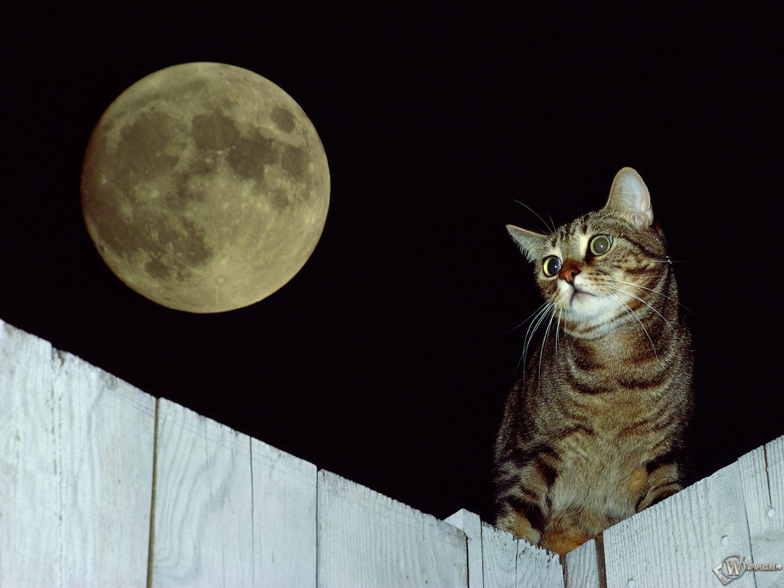 Кот при луне 1600x1200