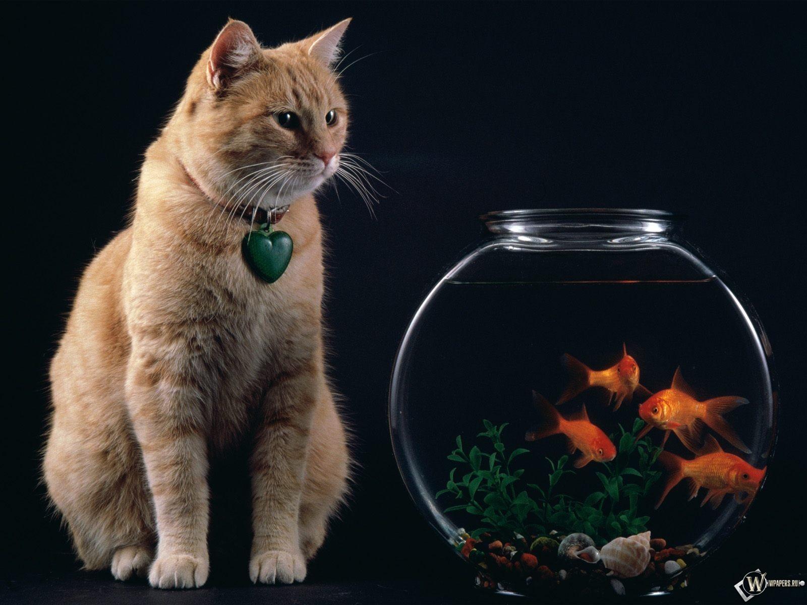 Кот с аквариумом рыбок 1600x1200