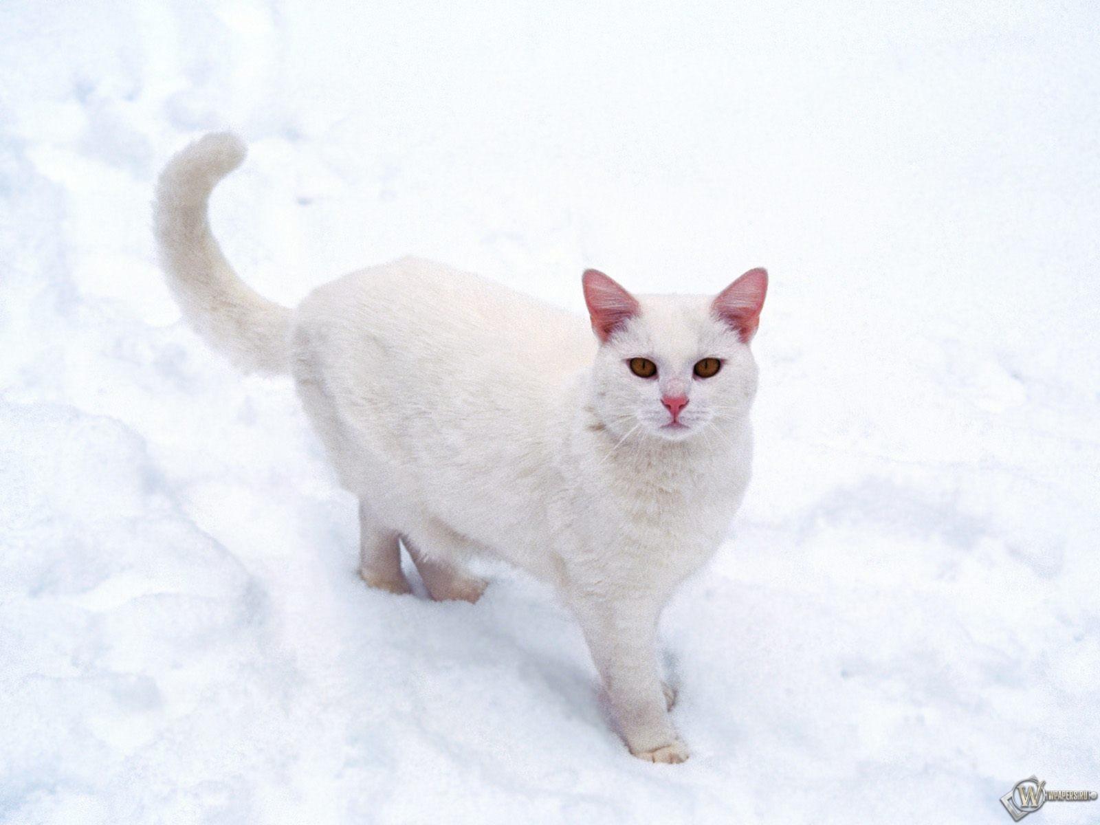 Кошечка на снегу 1600x1200