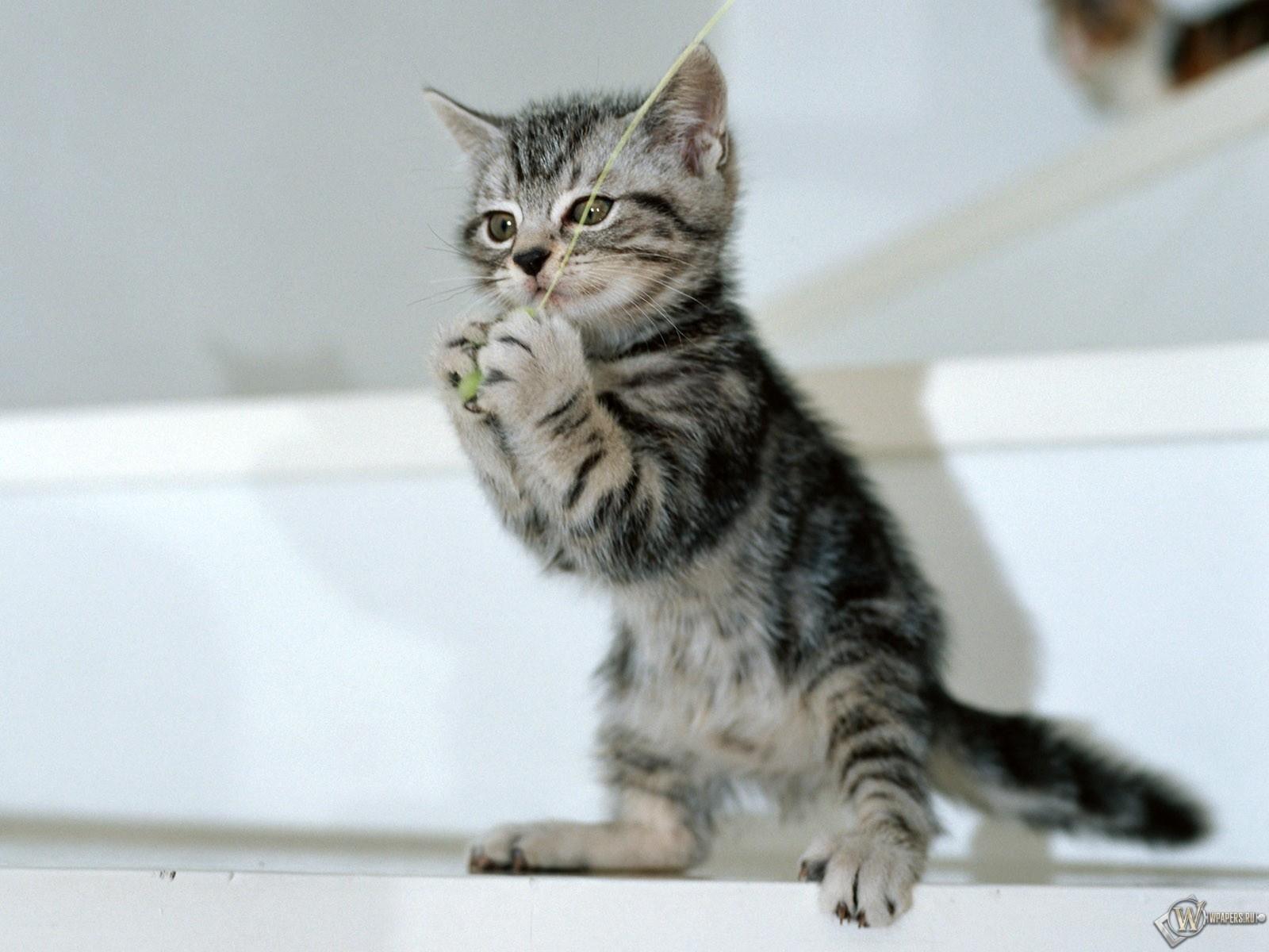 Котенок чтото поймал 1600x1200
